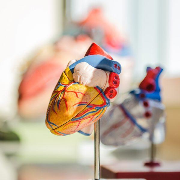 cardio-maria-real